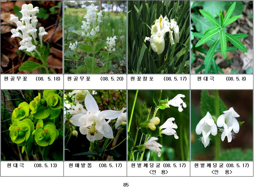 봄에 피는 야생화(5월-22)
