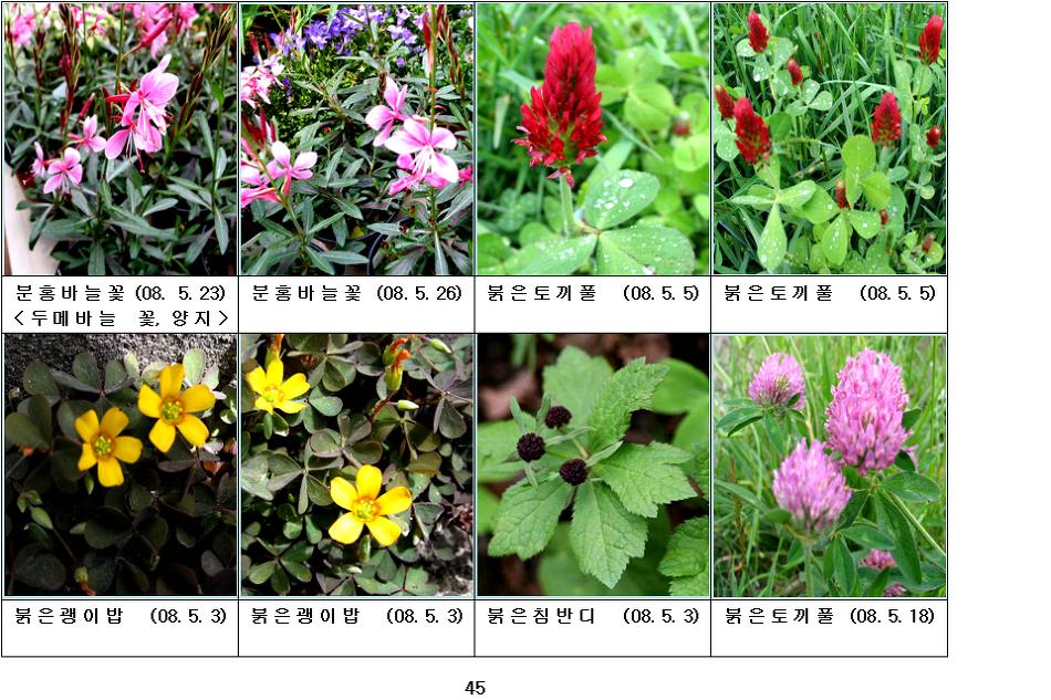 봄에 피는 야생화(5월-12)