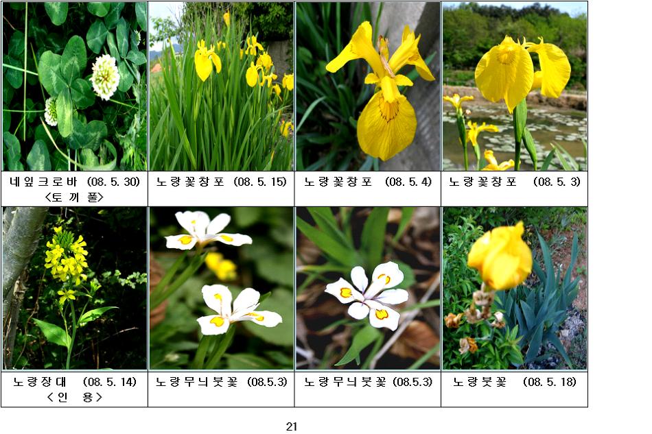 봄에 피는 야생화(5월-6)