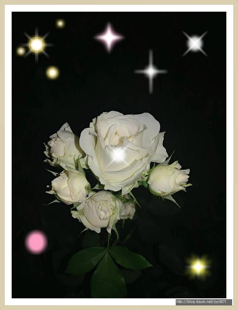 장미꽃33